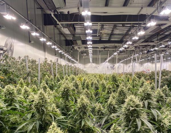 Surna Grow Facility
