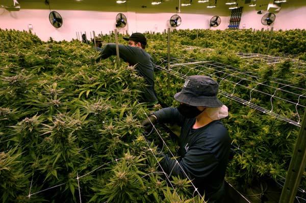 Washington Post photo of growers